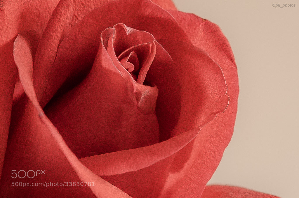 Photograph Petals by Paulo Luft on 500px