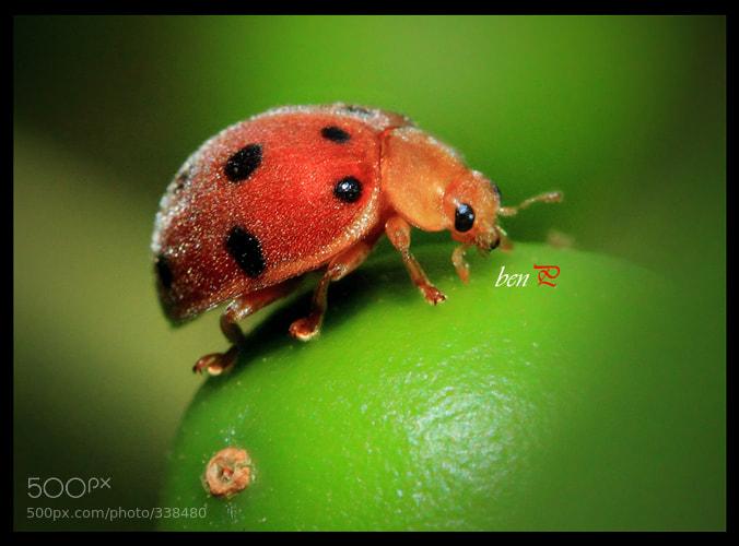 Photograph KEPIK n Fruit by Benjamin Pelawi on 500px