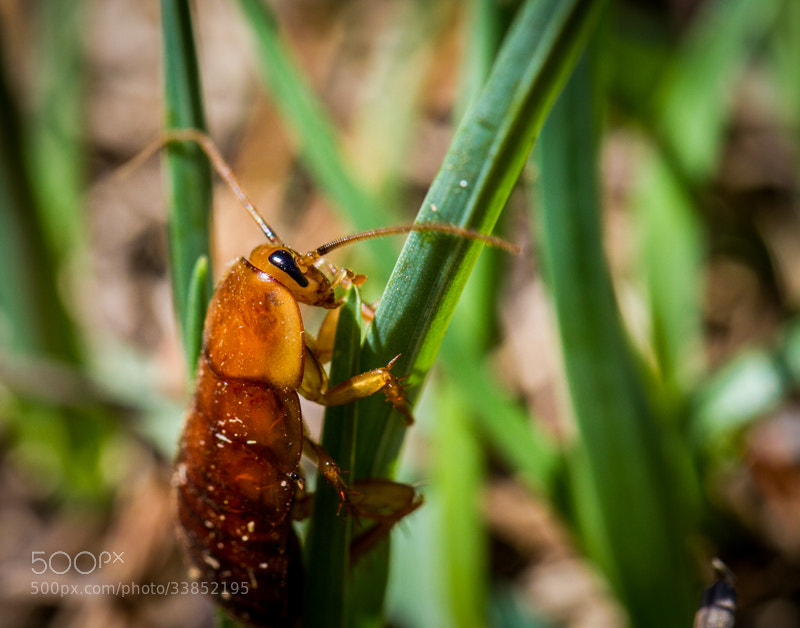 Photograph Insect pose by Maxwell Danger on 500px