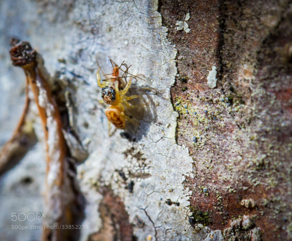 Photograph Spider Kill by Maxwell Danger on 500px