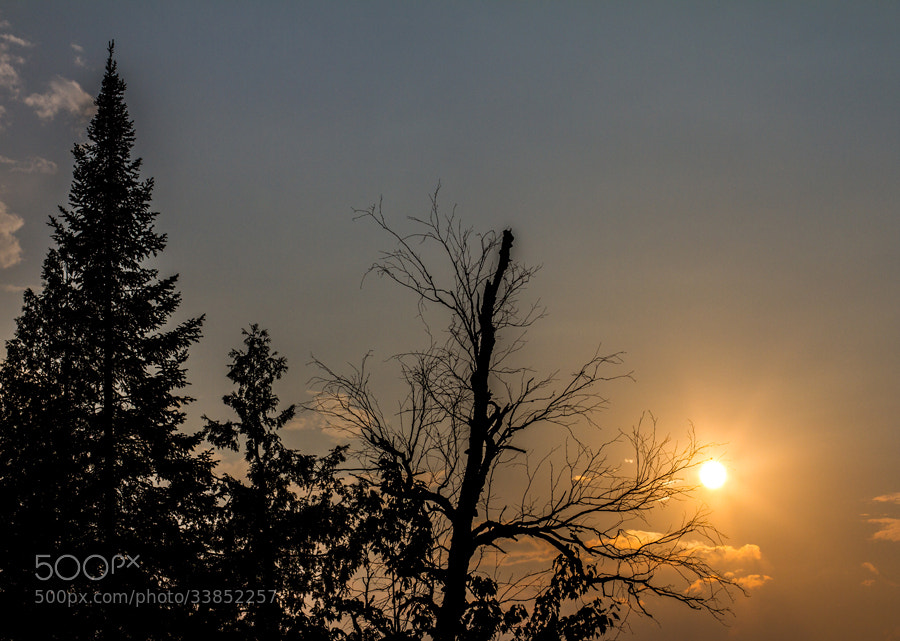 Photograph Sun and Trees by Maxwell Danger on 500px