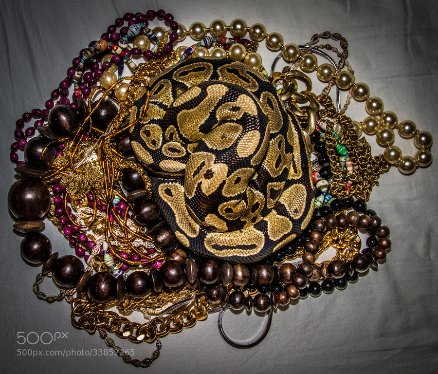 Photograph Snake Necklace by Maxwell Danger on 500px