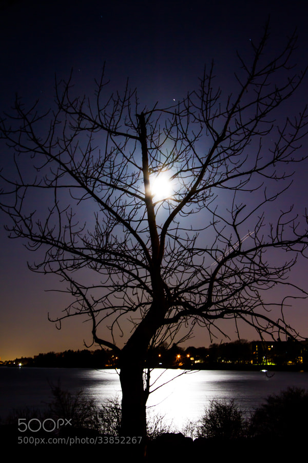 Photograph Moon Tree by Maxwell Danger on 500px