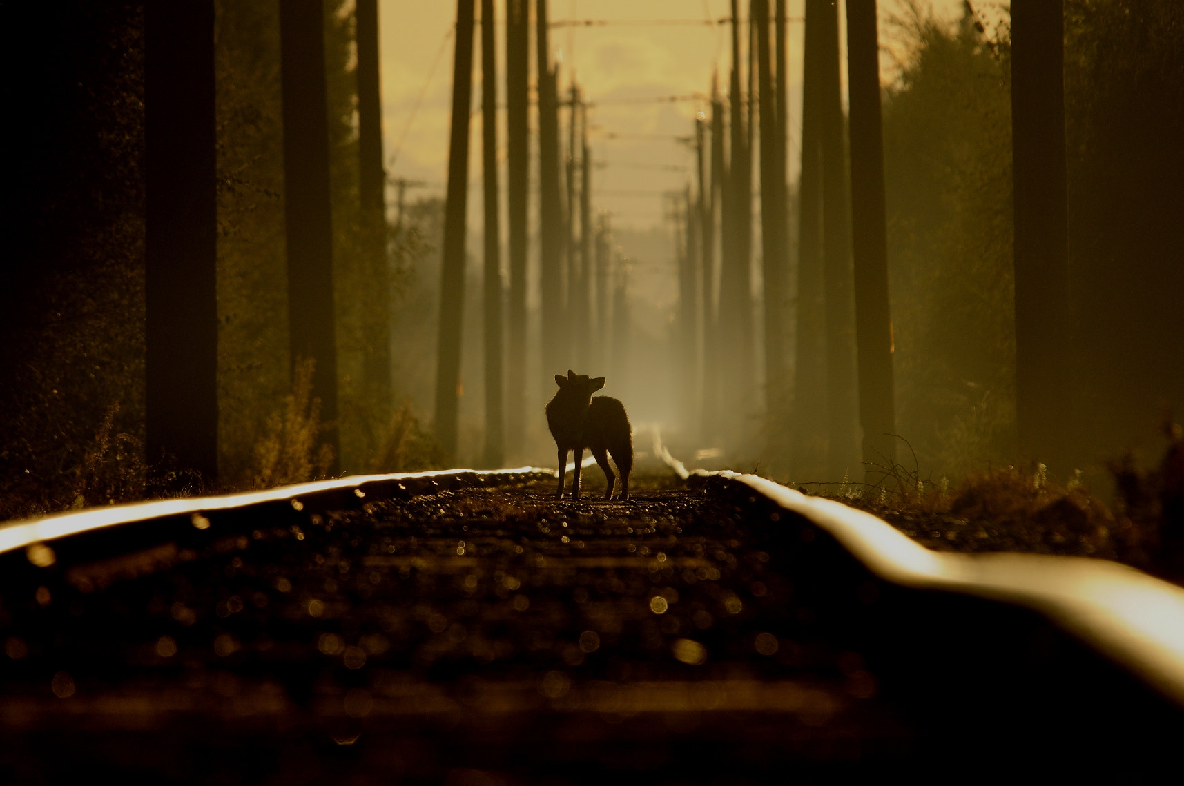 Photograph On the tracks of a coyote by Martin Cooper on 500px