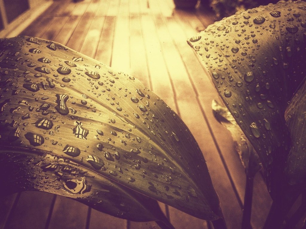 Photograph Planted Raindrops by geprime on 500px