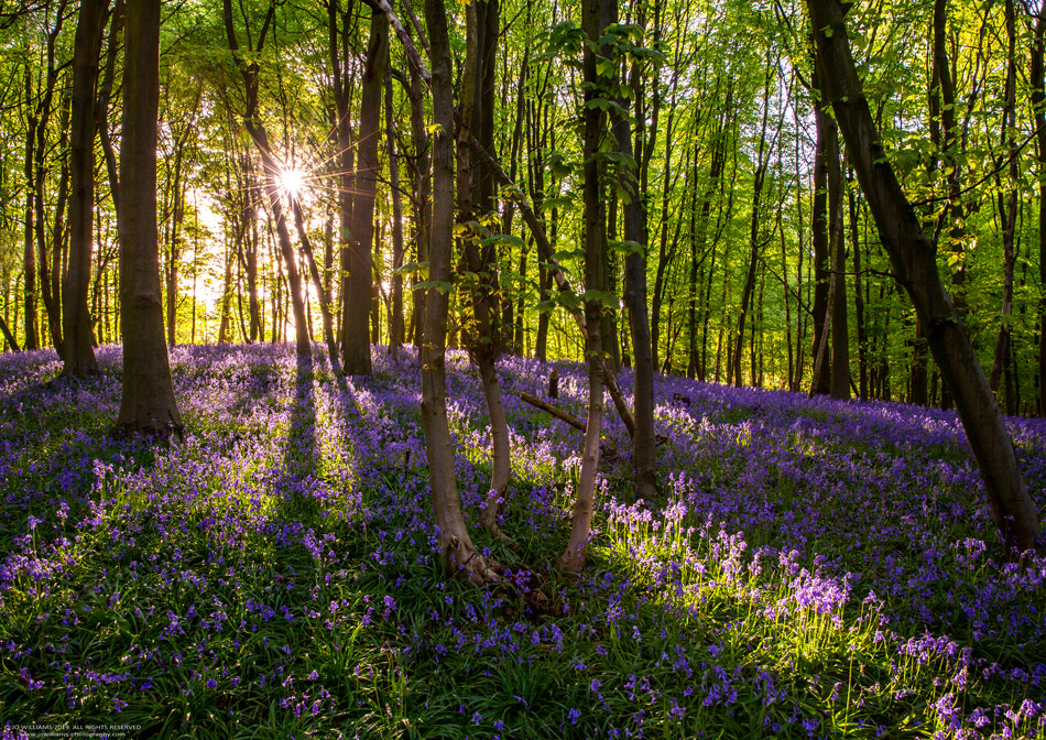 Photograph Enchanted forest by jo williams on 500px