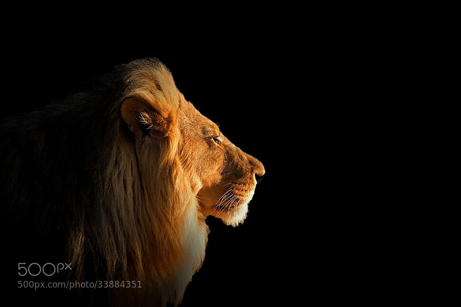 i'm the king by wise photographie (wise-photographie)) on 500px.com