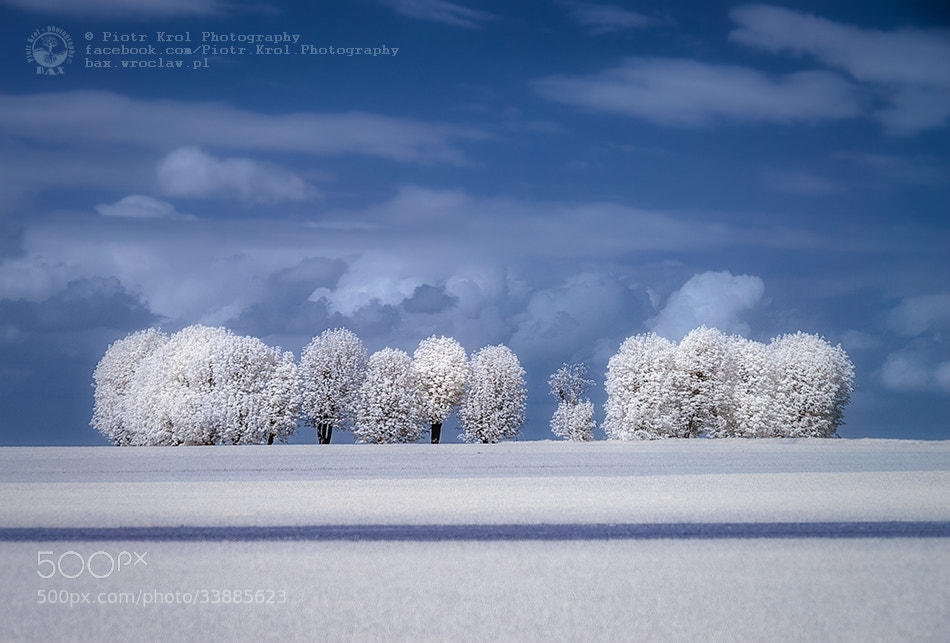 Photograph IRenka by Piotr Krol on 500px