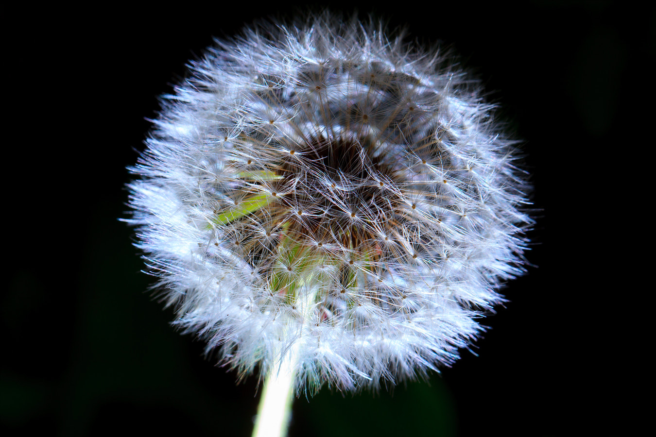 Photograph dandelion by LEE HOE GEON on 500px