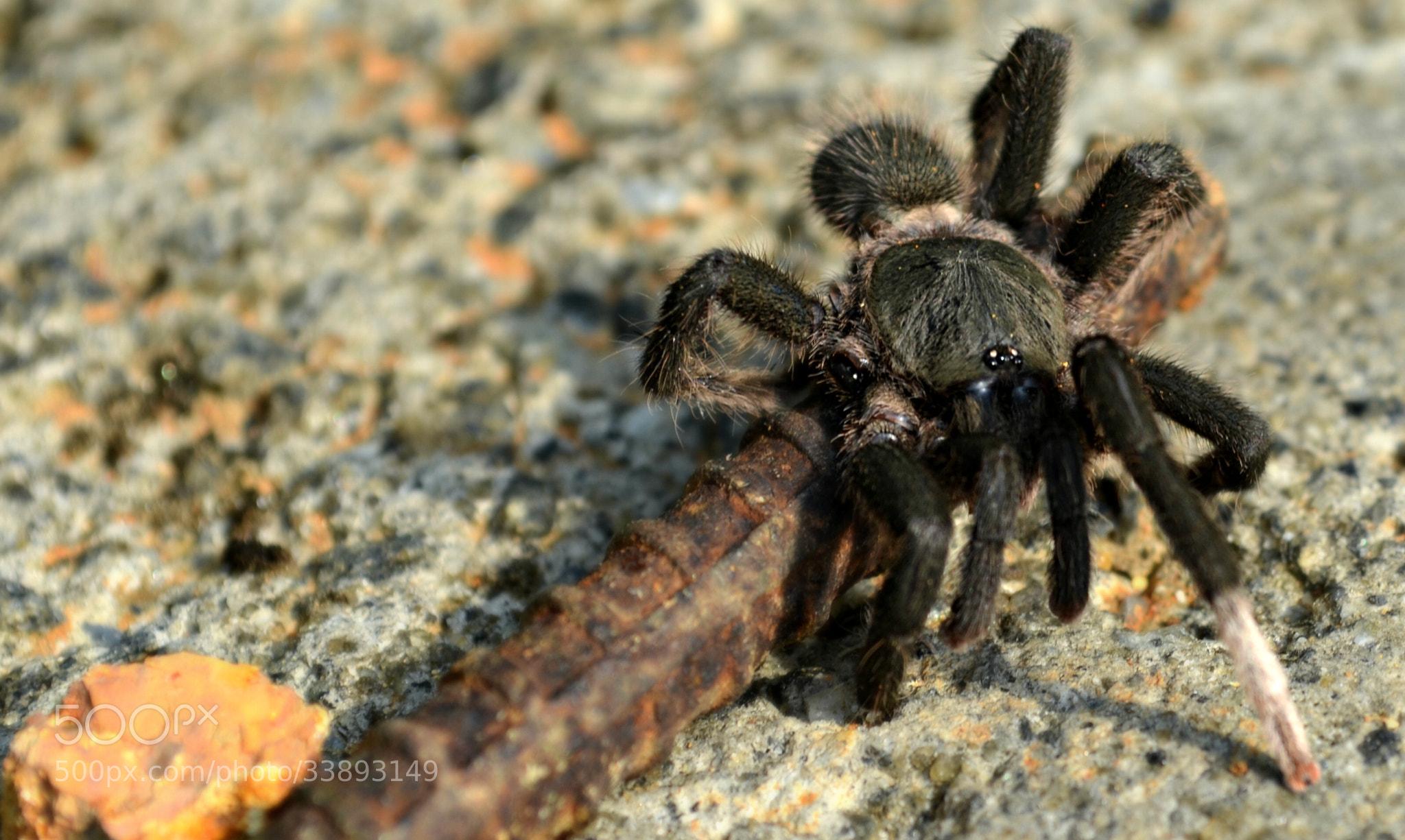 Photograph Arachnophobia... by Krishnendu Sarma on 500px