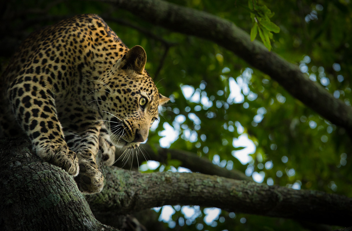 Photograph From within the shadows... by Marlon du Toit on 500px