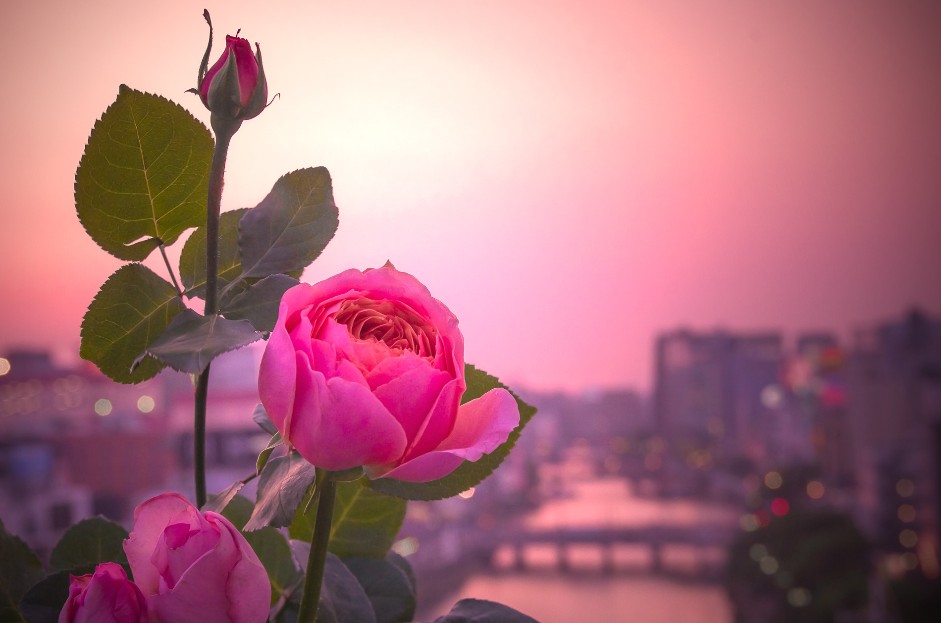 Photograph Rosy Sunset by Sachiko Kawakami on 500px
