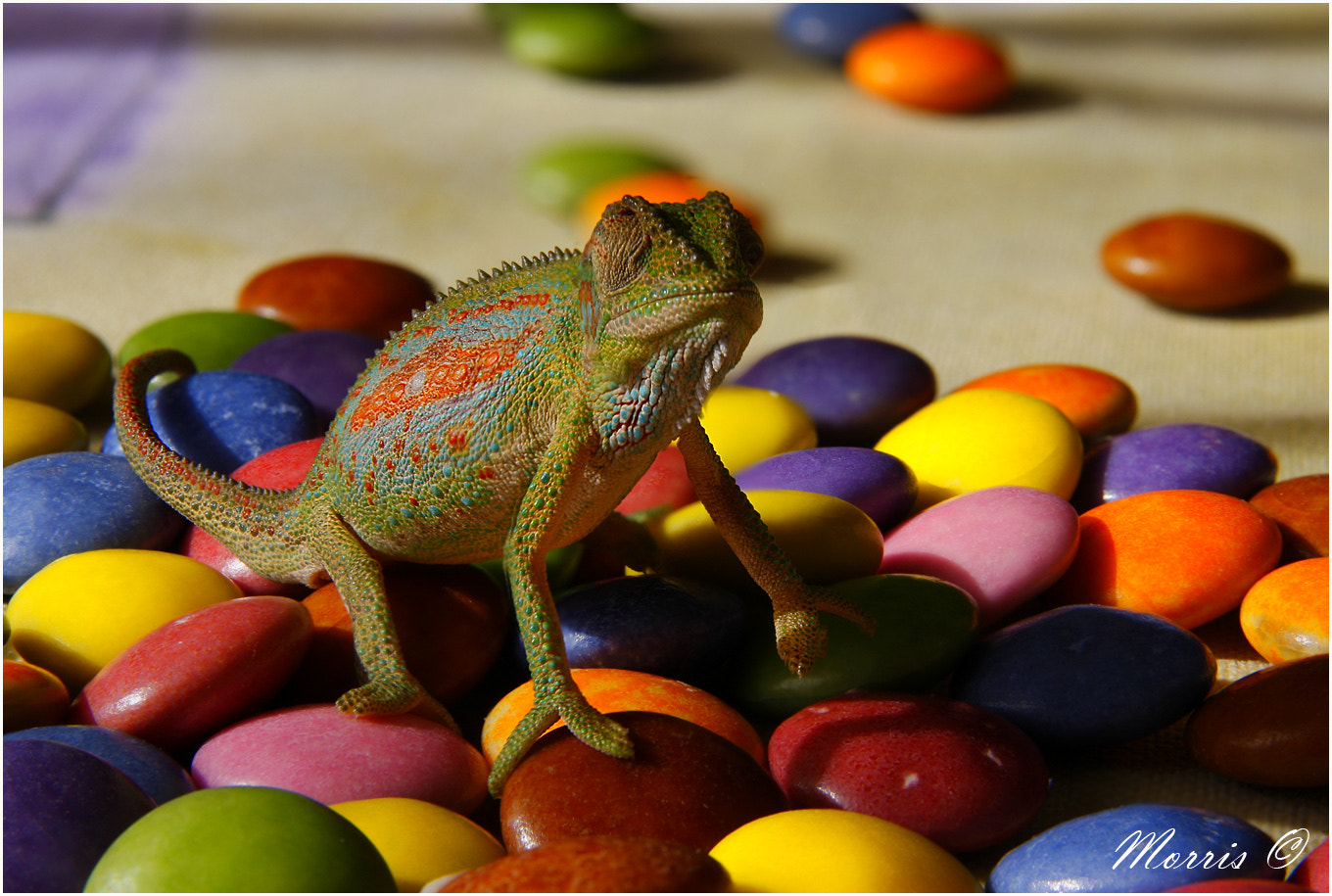 Photograph Smarties... by Dave Morris on 500px