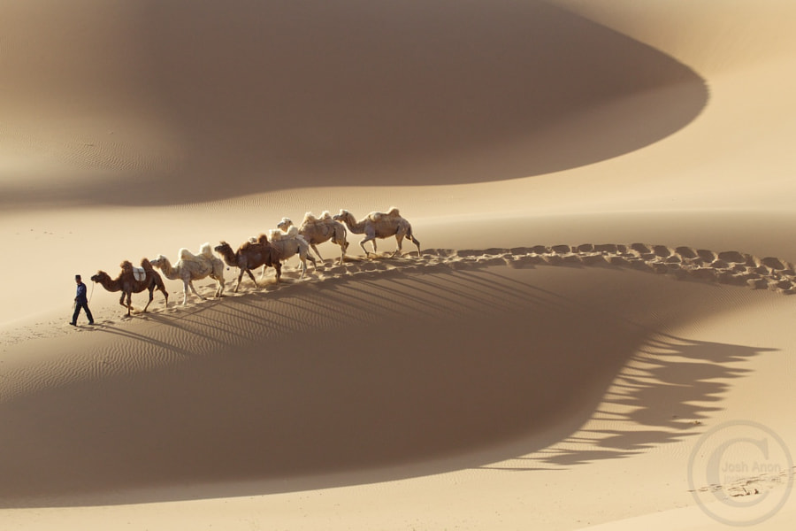Camel Shadows by Josh Anon on 500px.com