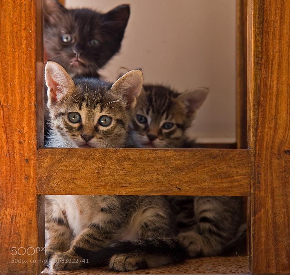 Photograph kitten by Thanasis Samaras on 500px