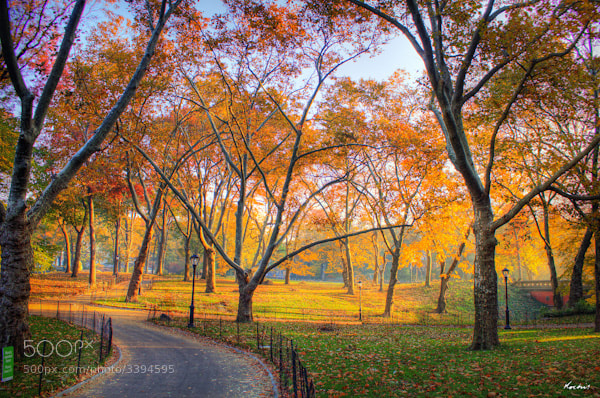 Photograph Central park series by Randy Kochis on 500px