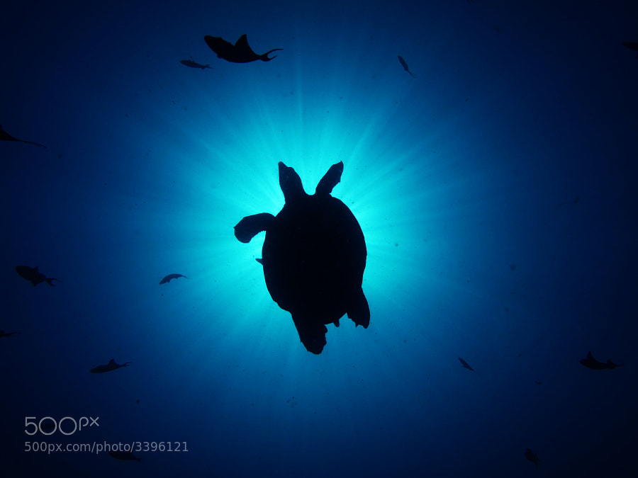 Photograph Loggerhead Turtle... by Hassan Rasheed Wajdy on 500px