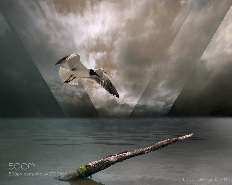 Photograph Flight of the Atlantian by J. Mark Edmonds on 500px