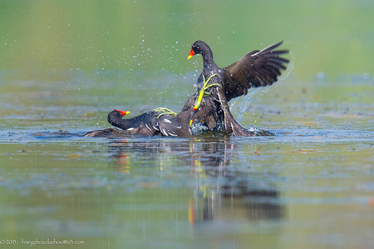 Photograph Fighting for female by Xiaojun Shen on 500px