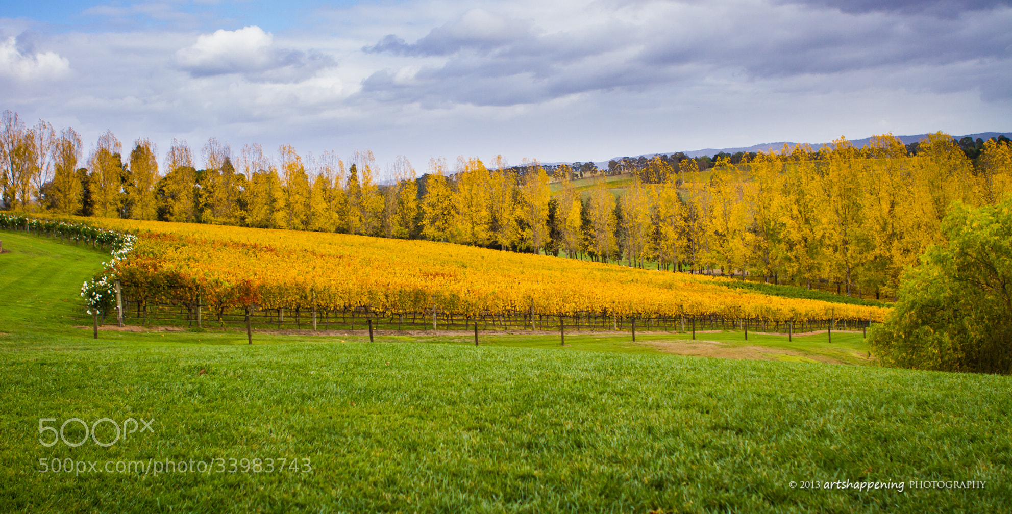 Photograph Autumn Vines by Green Orchard Photography on 500px