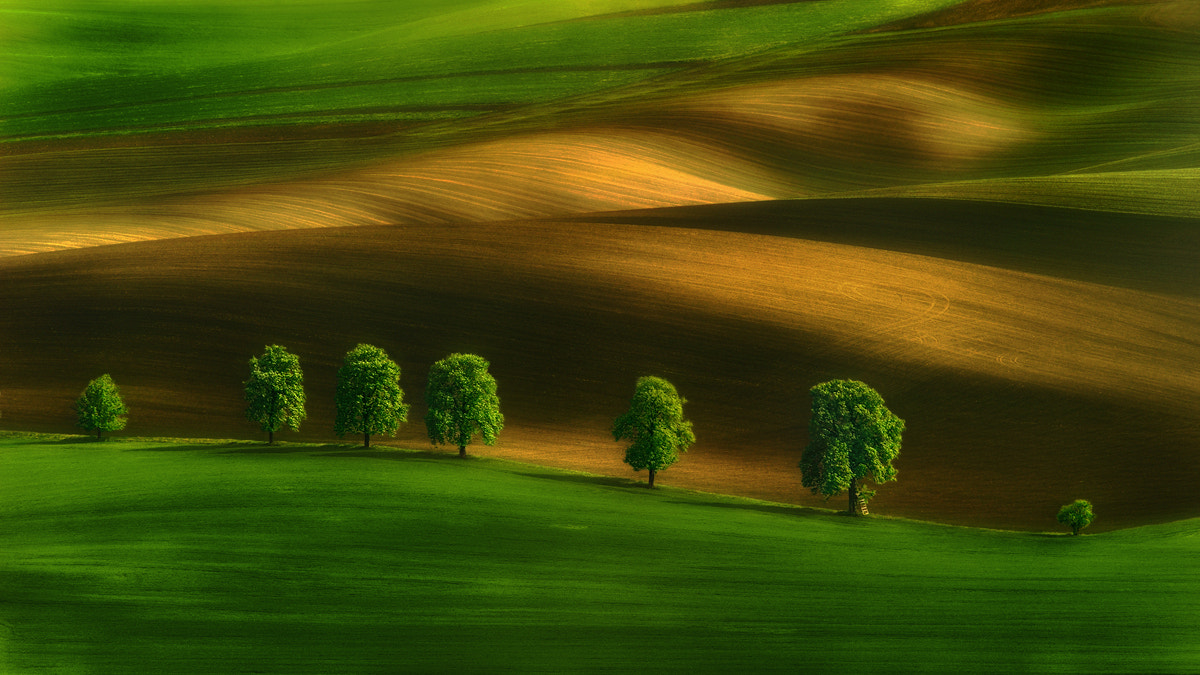 Photograph Moravian Chestnuts... by Pawel Kucharski on 500px