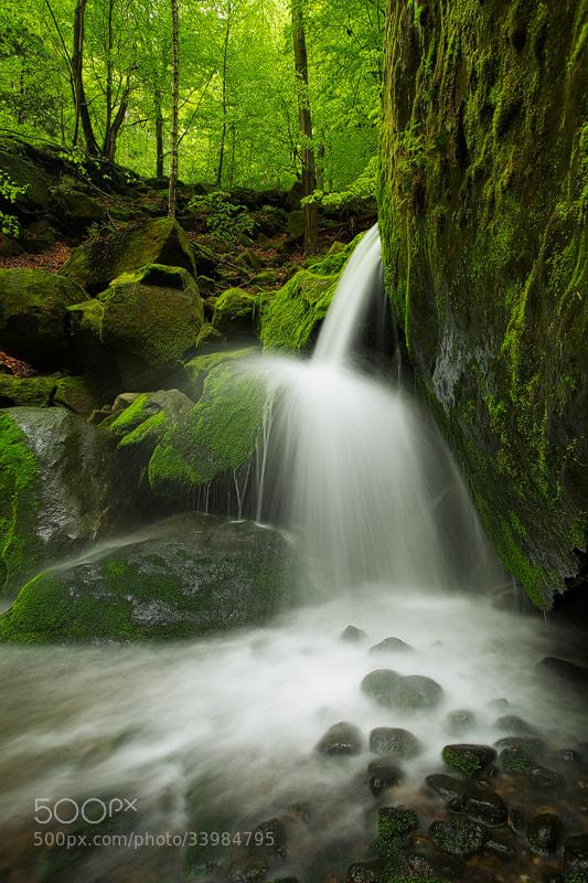 Photograph Fresh Green by Martin Rak on 500px