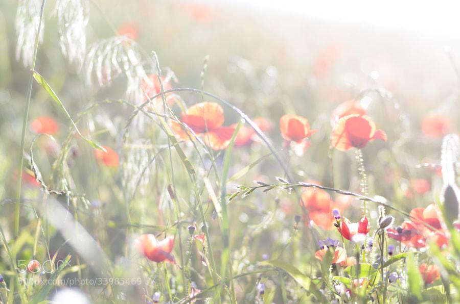 Photograph   Wild Beauty by Judith Jean-Baptiste on 500px