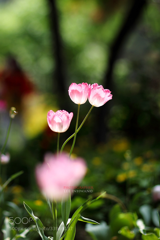 Photograph Spot light by LEE INHWAN on 500px