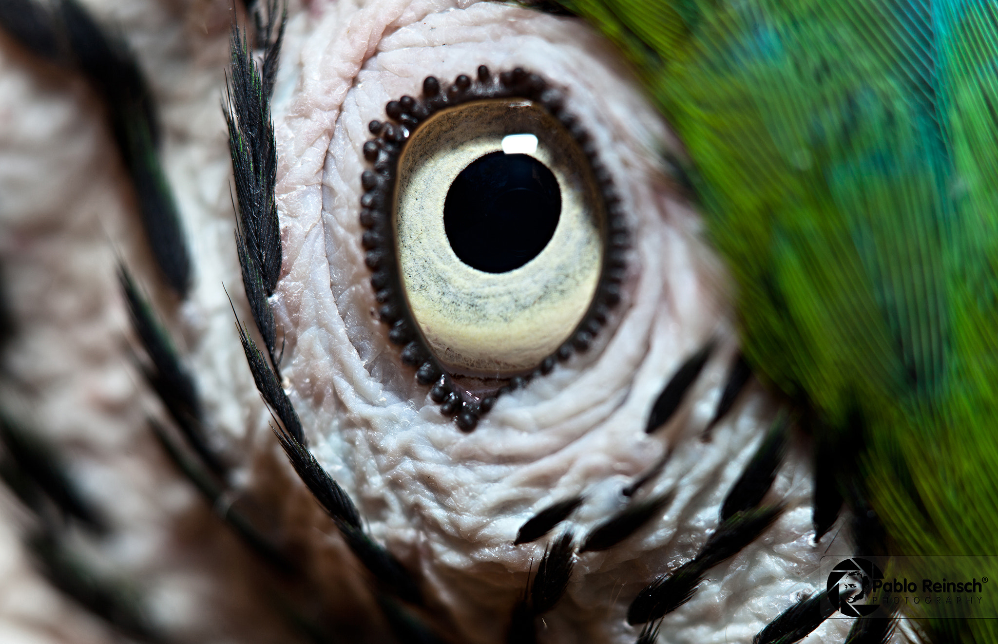 Photograph The eye by Pablo Reinsch on 500px