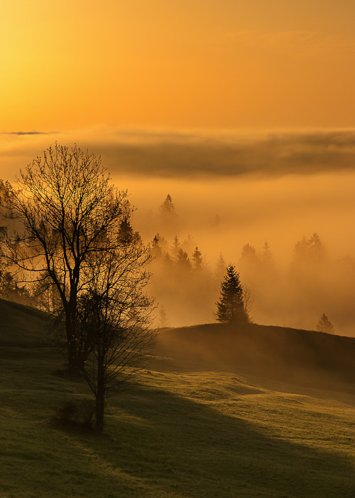 Photograph golden meadow by Marek Wilczura on 500px