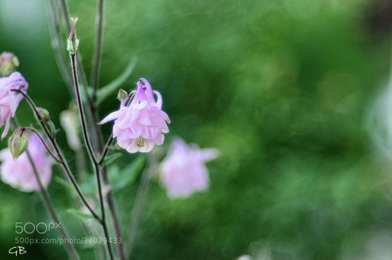 Photograph fiore..... by lapococa on 500px