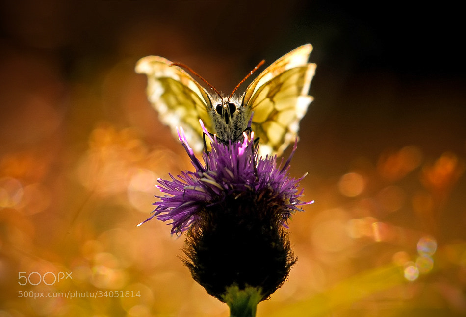 Photograph * The butterfly angel * by clement jousse on 500px