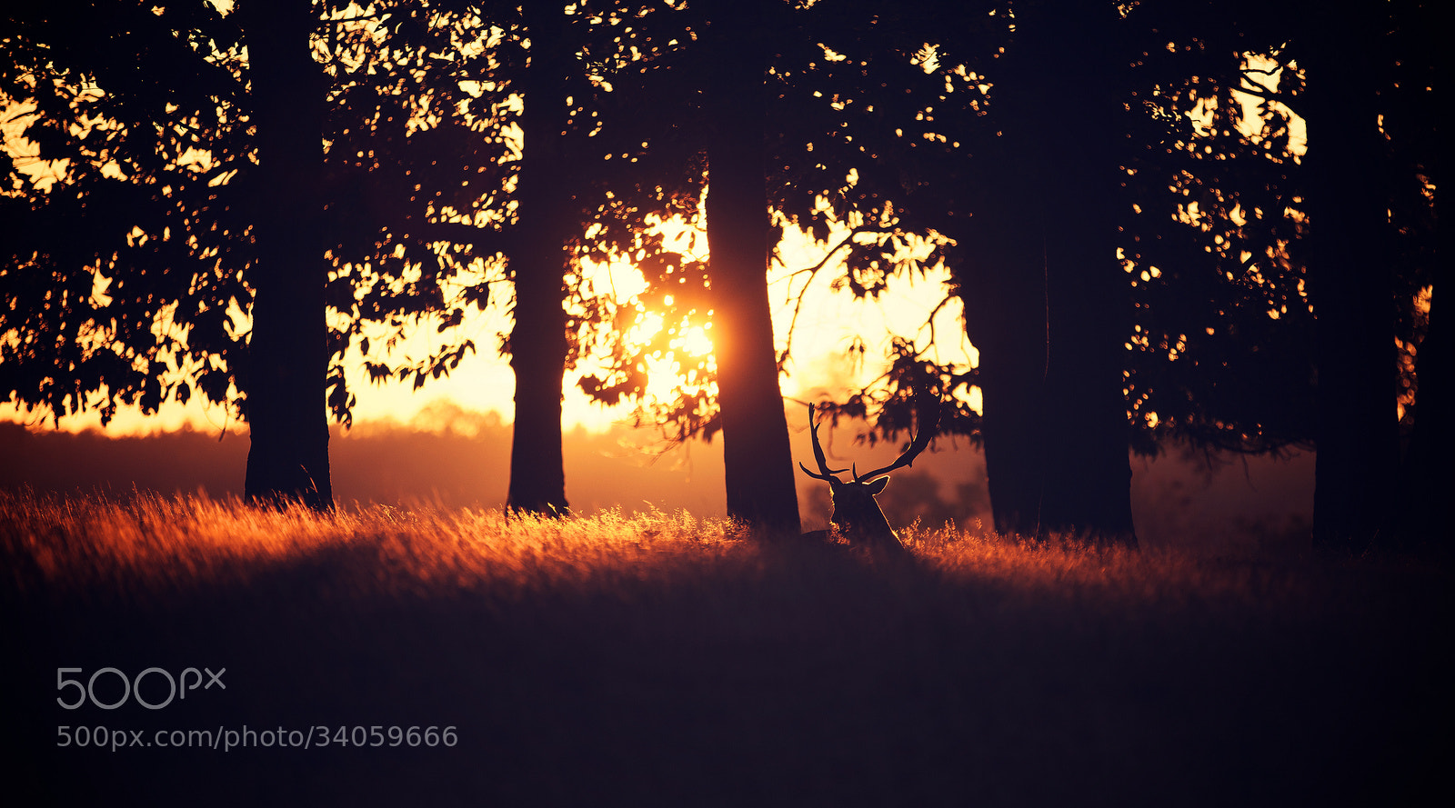 Photograph solitary by Mark Bridger on 500px