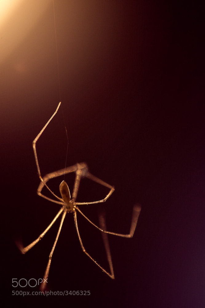 Photograph Backlit Spider by Matthew Dartford on 500px
