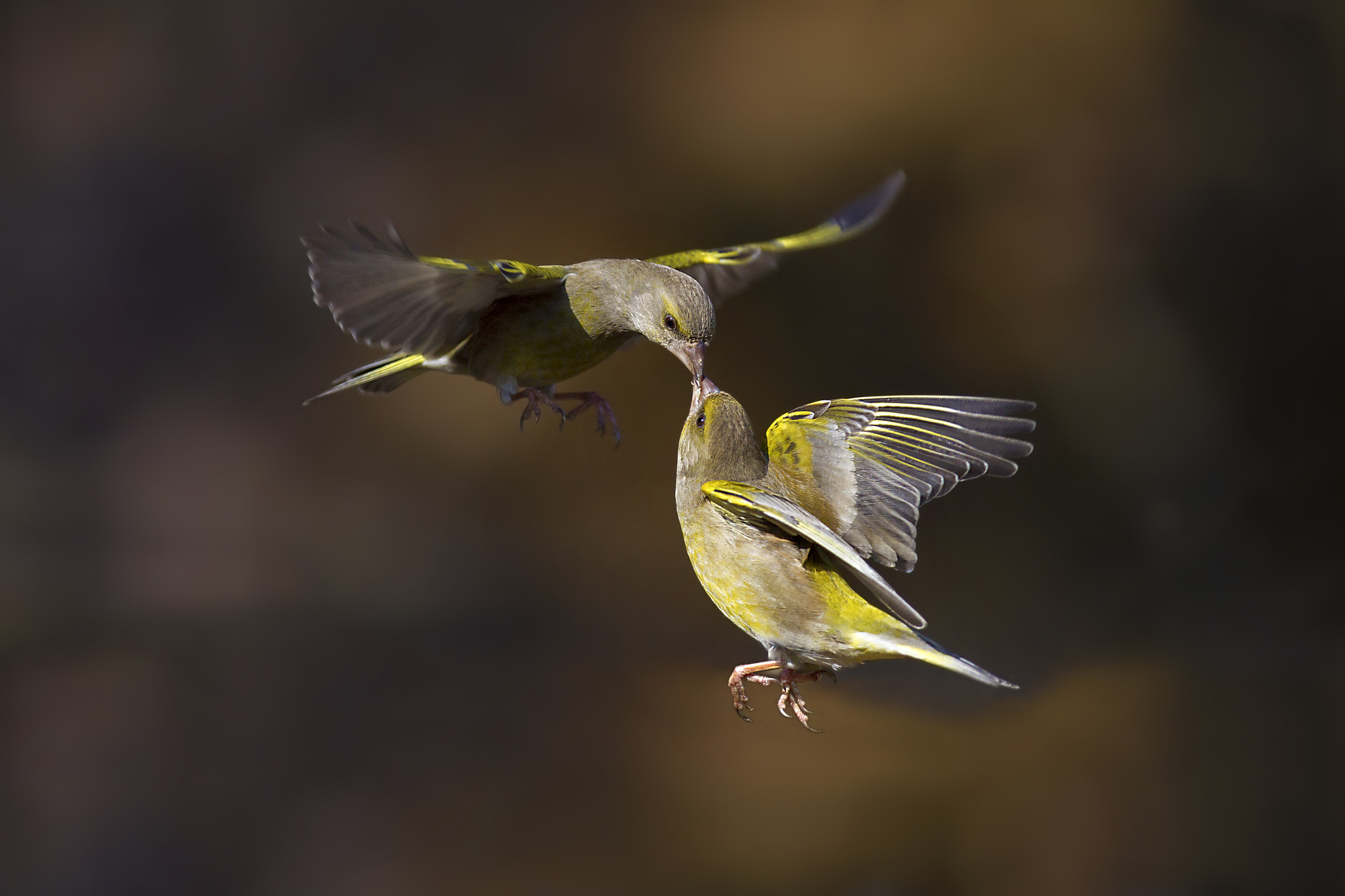Photograph Flying kiss 2 by Marco Redaelli on 500px