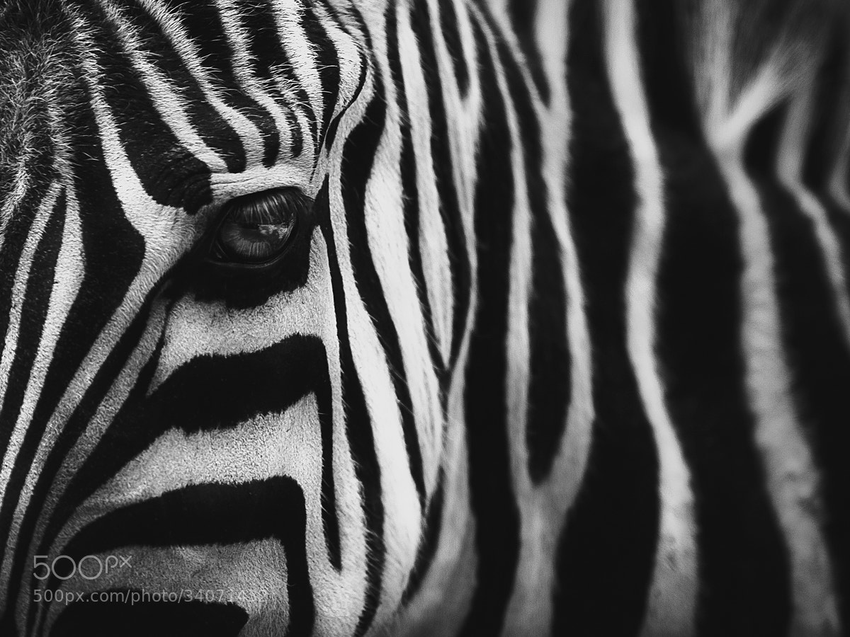 Photograph Black With White by Shay Wax on 500px