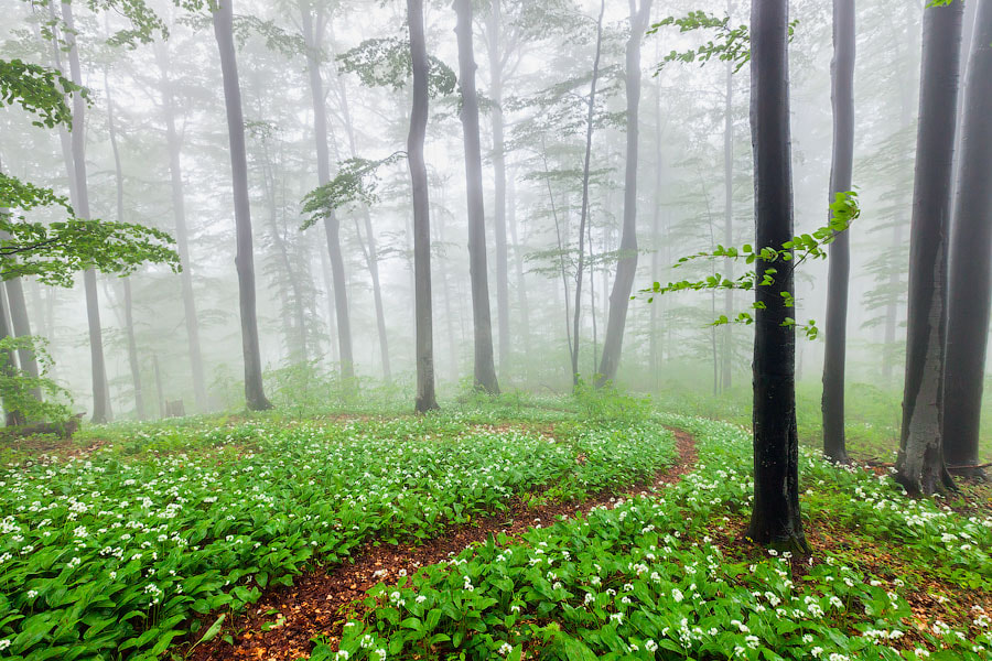 Photograph Forest with smell of garlic by Evgeni Dinev on 500px