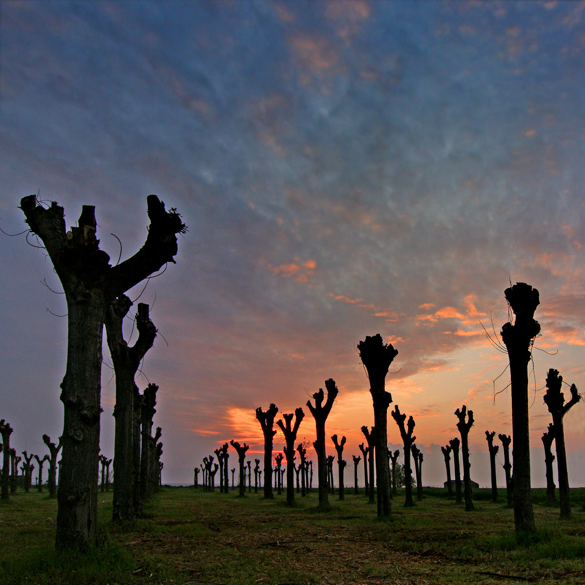 Photograph Sunset on the trees by ivo pandoli on 500px