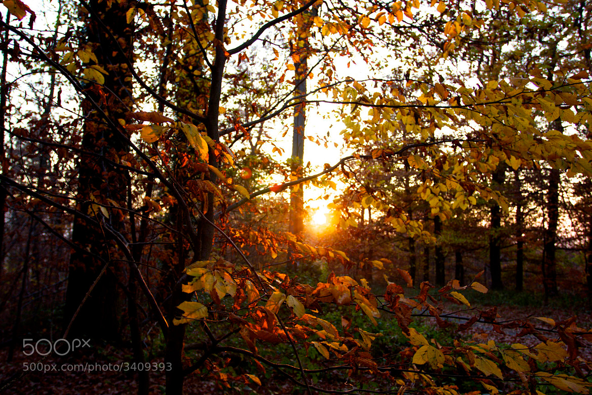 Photograph Autumn Forest by Guido Merkelbach on 500px