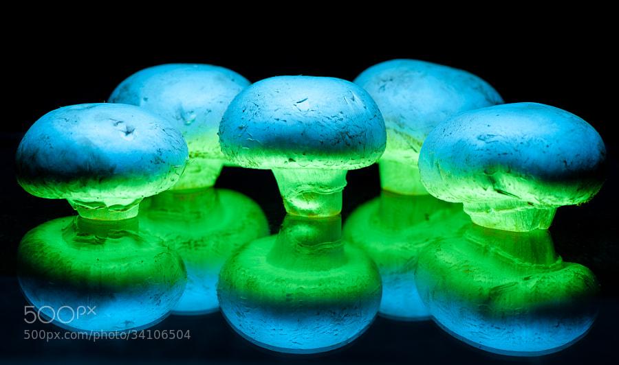 Stuffers - 1 by Jay Scott (jayscottphotography)) on 500px.com