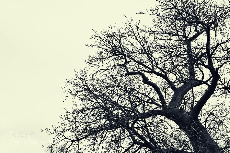 Photograph Branched by Mutua Matheka on 500px