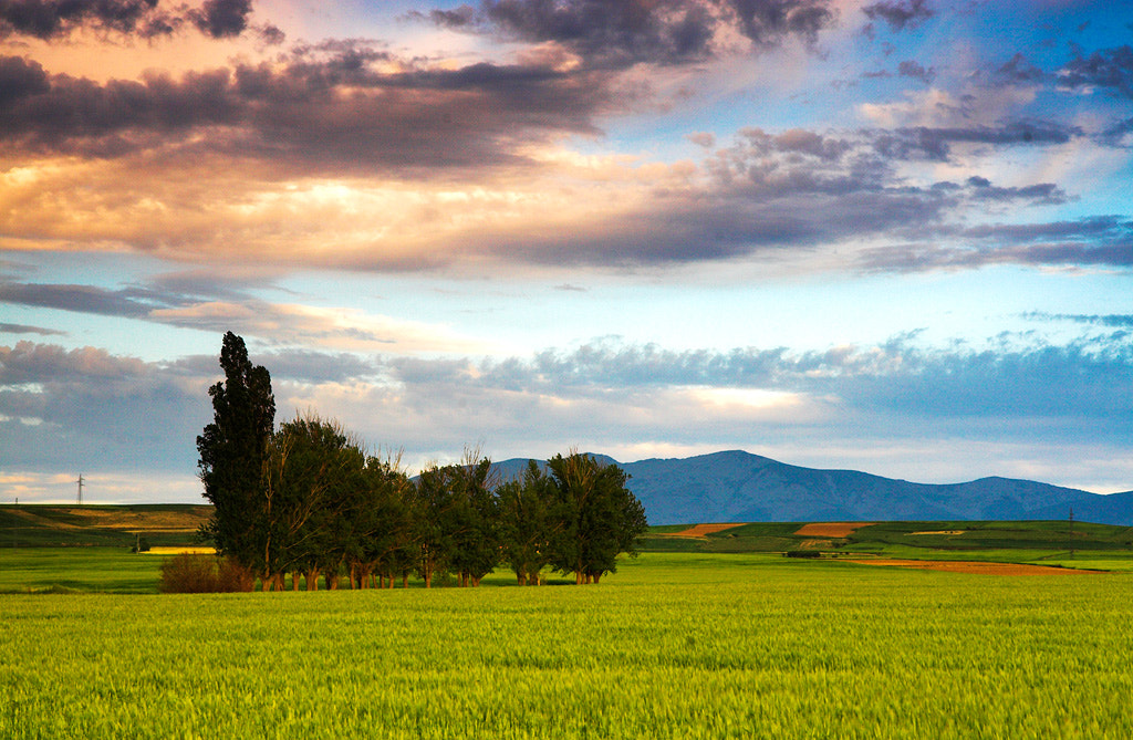 Photograph Planted field at sunset by Javier Abad on 500px