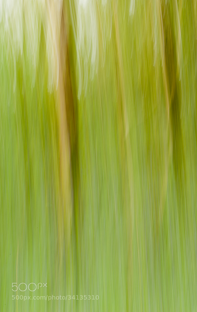 Photograph Abstract Bluebell Wood by Claire Borlase on 500px