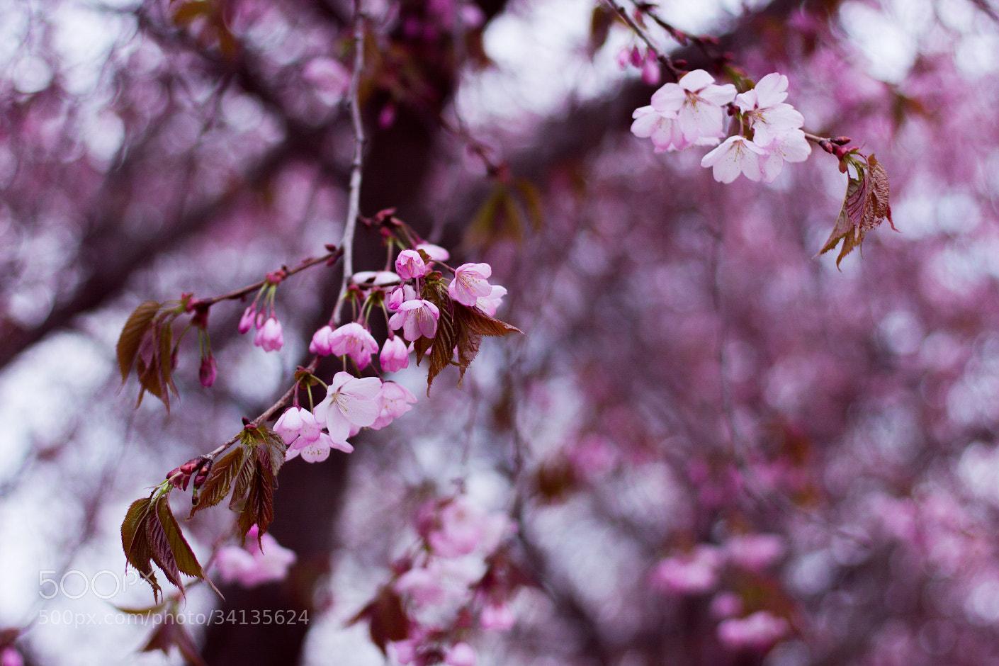 Photograph bloom by Kauri Uusimies on 500px