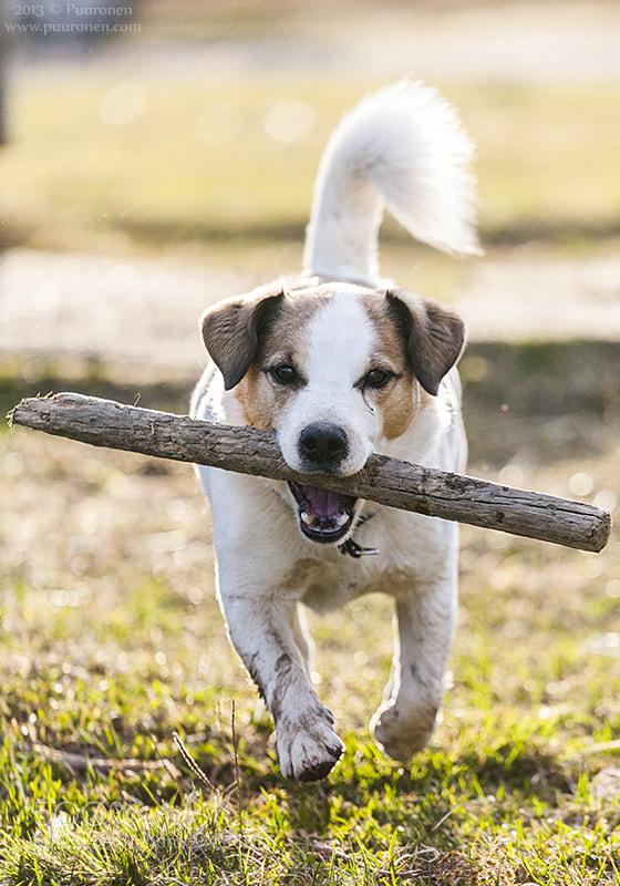 Photograph DOG by Samu Puuronen on 500px