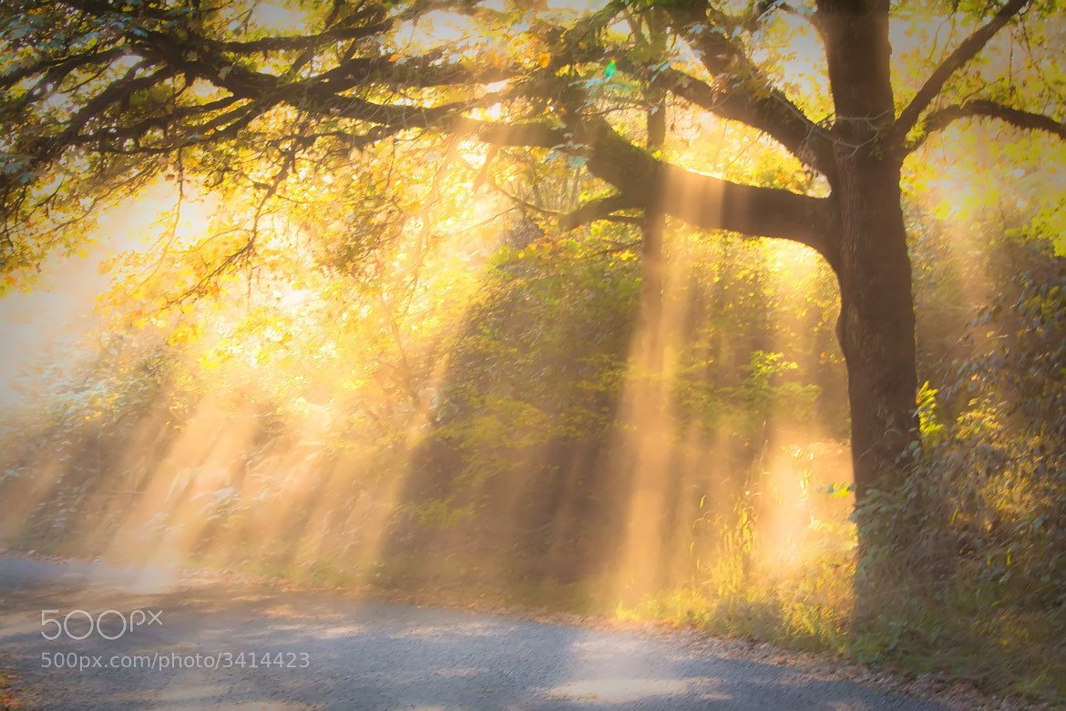 Photograph Shining Through... by Jeff Jacobson on 500px