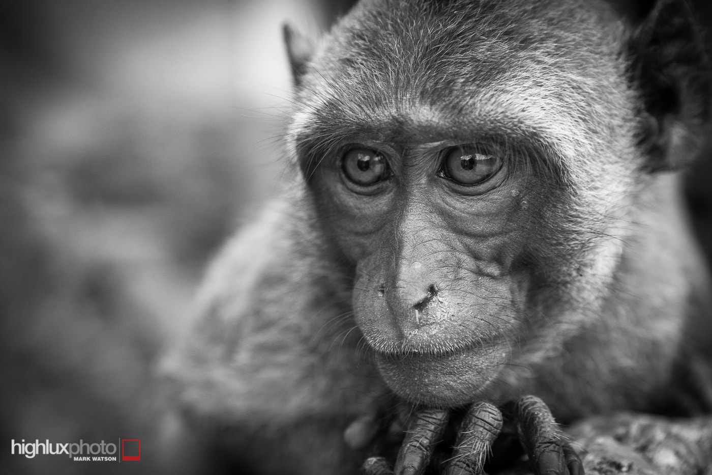 Photograph Pondering Macaque by Mark Watson on 500px