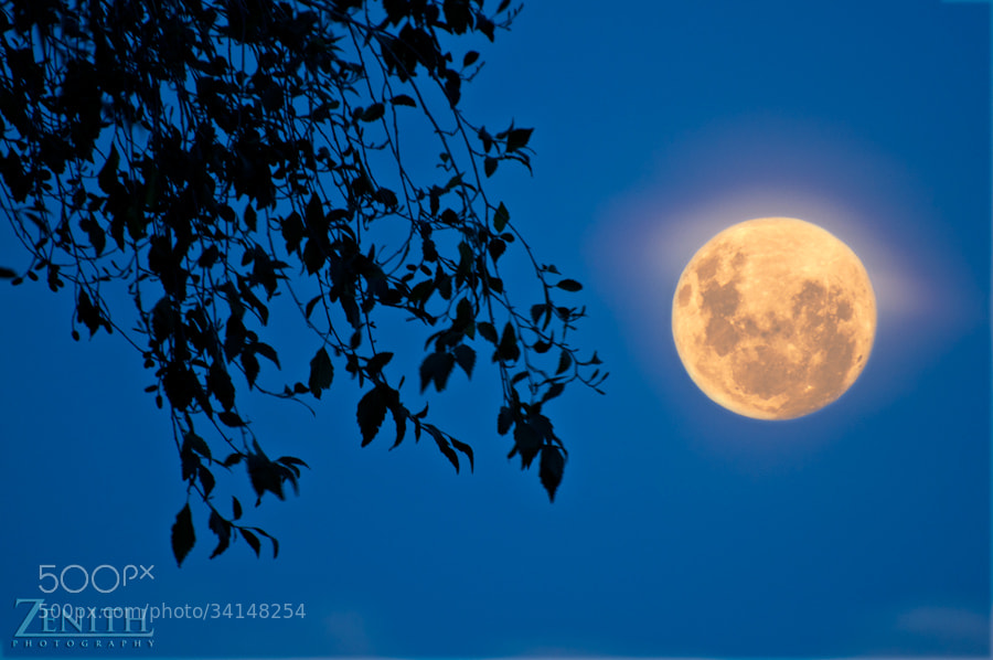 Photograph Full Moon Rising by Joshua Tagicakibau on 500px