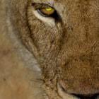 Sabi Sand Private Game Reserve, Kruger National Park, South Africa