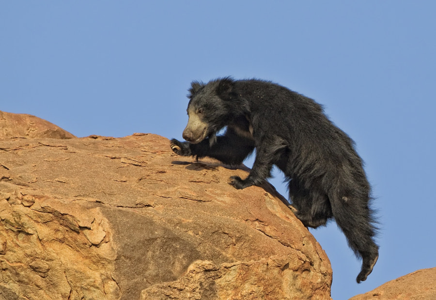 This was actally quite a long drop below this rock face, taken in Daroji Sloth Bear Sanctuary, India